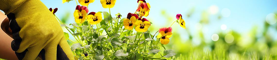 Gardening & Nature
